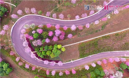 超美! 紫荆花丛中的柳州汽车城!